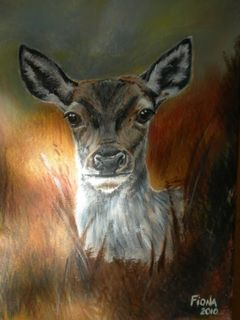 Portrait of Casentino deer