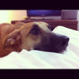 Cleo needs a loving home