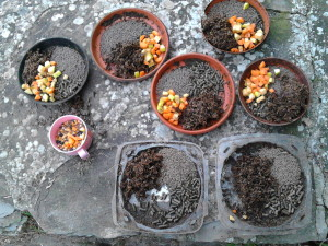 The alpacas' breakfast plus seed for the three handicapped pigeons